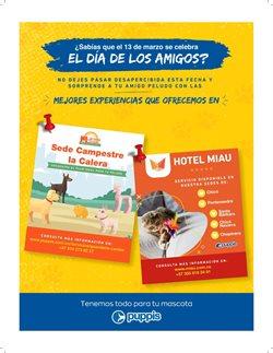 Ofertas de Hoteles en Puppis