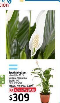 Oferta de Spathiphyllum por $309